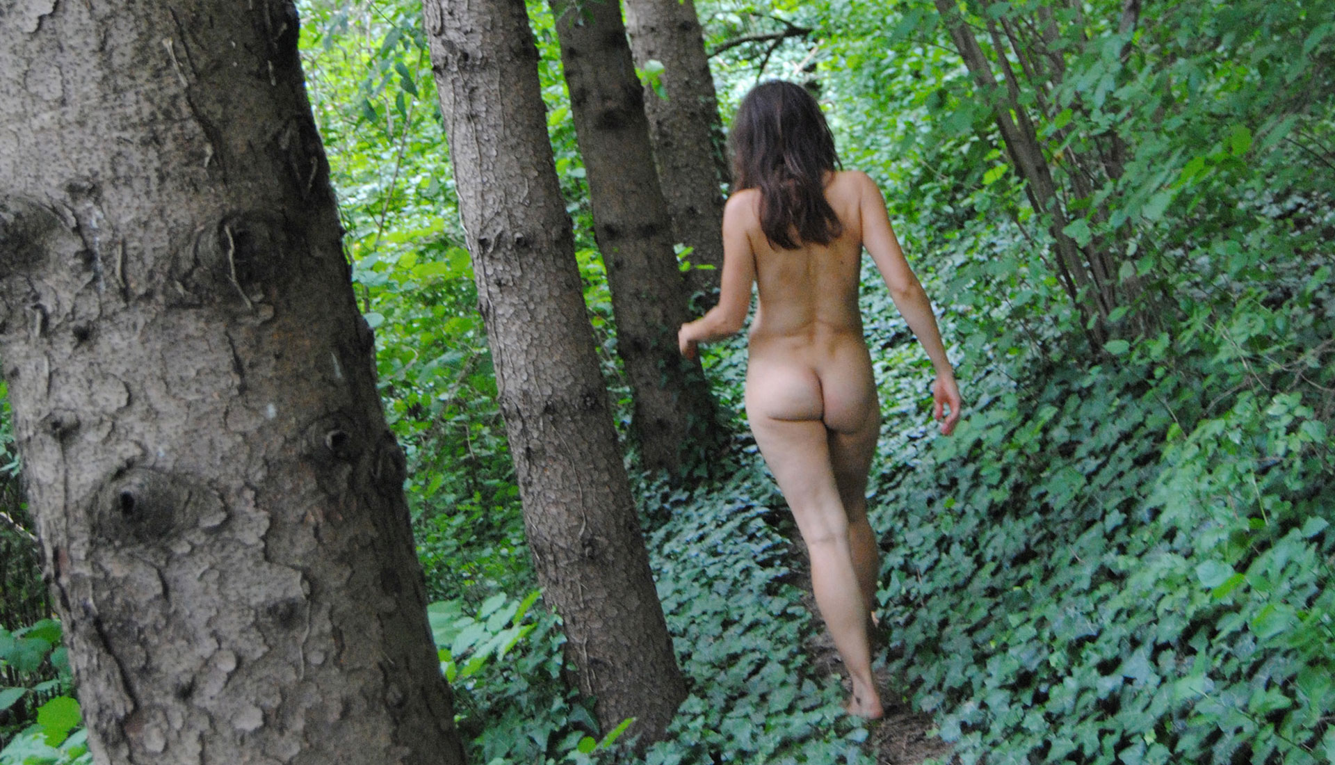 Trek in the centuries-old forest … in total freedom